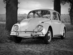 Good -Bye Sweet Beetle